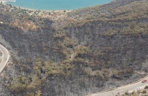 Nükleer santral yapan firma yanan ormanlara göz dikti!