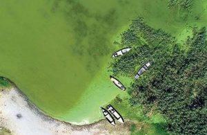 Uluabat Gölü ve Eğirdir Gölü için tehlike çanları çalıyor