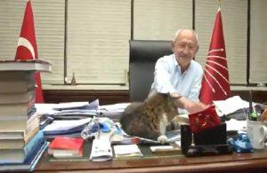 CHP, Kılıçdaroğlu ile kedi Şero'yu paylaştı: 'İşimiz çok, mesaimiz yoğun'